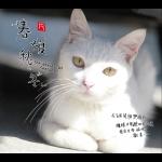 《春・夏・秋・冬》( CD 版 )<br>The Beauty Of Seasons / 作曲:藤原育郎